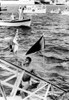 1968 Olympics History - Item # VAREVCSBDNISICS004