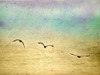 Seagulls in the Sky II Poster Print by Ynon Mabat - Item # VARPDX10678