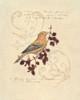 Filigree Songbird Poster Print by Chad Barrett - Item # VARPDX122BAR1183