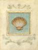 Classic Scallop Poster Print by Arnie Fisk - Item # VARPDX011FIS1069