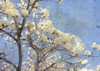 Magnolia Dream Poster Print by Kimberly Allen - Item # VARPDXKARC180A