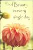 Orange Puff Dahlia Bud Poster Print by Suzanne Foschino - Item # VARPDXZF3RC247B