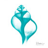 Turquoise Tulip Shell Poster Print by Albert Koetsier - Item # VARPDXAK8SQ044D