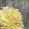 In Nature Yellow Poster Print by Kimberly Allen - Item # VARPDXKASQ059A