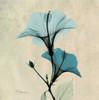 Hibiscus Poster Print by Albert Koetsier - Item # VARPDXAK5SQ029A