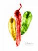 Peppers Picante Poster Print by Albert Koetsier - Item # VARPDXAK8RC020A