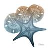 Steel Hues Starfish and Sand Dollar Poster Print by Albert Koetsier - Item # VARPDXAK8SQ016B