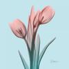 Awakening Tulips 1 Poster Print by Albert Koetsier - Item # VARPDXAK8SQ069A
