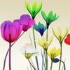 Floral Calm Pop Mate Poster Print by Albert Koetsier - Item # VARPDXAK8SQ392B