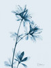 Azalea in Blue Poster Print by Albert Koetsier - Item # VARPDXAKRC021C