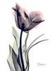 Single Tulip in Color Poster Print by Albert Koetsier - Item # VARPDXAKRC121A