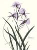 Orchids a Plenty in Purple Poster Print by Albert Koetsier - Item # VARPDXAKRC130B