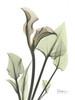 Calla Lily in Green Poster Print by Albert Koetsier - Item # VARPDXAKRC171