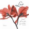Royal Red Orchid - Love Again Poster Print by Albert Koetsier - Item # VARPDXAKXSQ133D