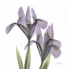 A Gift of Flowers in Purple Poster Print by Albert Koetsier - Item # VARPDXAKXSQ315A