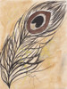 Peacock Feather Poster Print by Beverly Dyer - Item # VARPDXBDRC133A