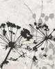 Tranquil Grass 2 BW Poster Print by Diane Stimson - Item # VARPDXDSRC281B1
