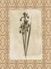 Floral bordered 2 Poster Print by Jace Grey - Item # VARPDXJGRC264B