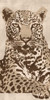 Leopard Poster Print by Andrew Cooper # ACO5958