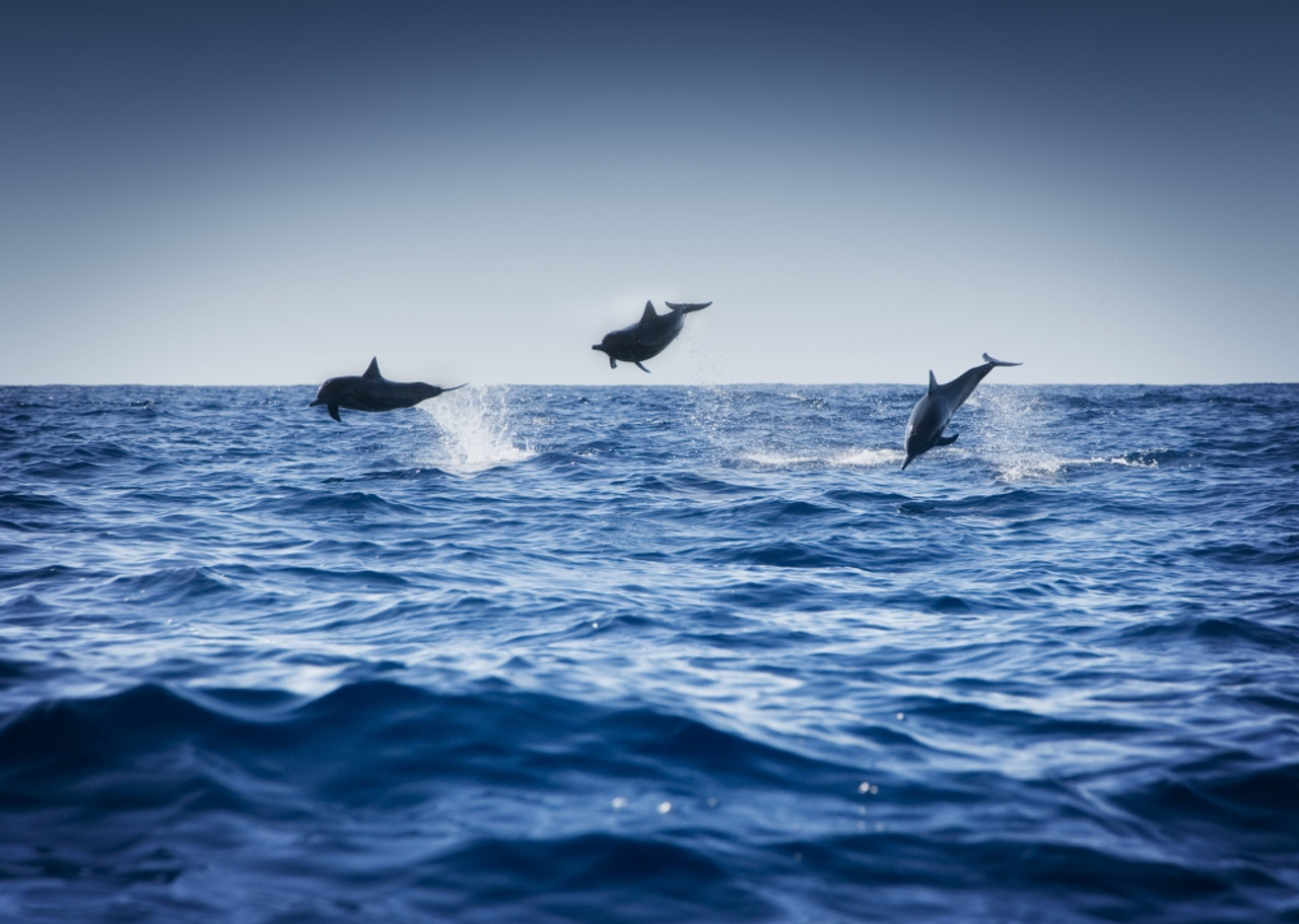 3549 Picture Poster Print Art A0 A1 A2 A3 A4 DOLPHIN DIVING Animal Poster