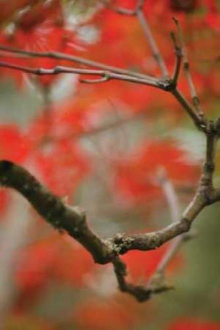Autumn Tree Dance I Poster Print by Vitaly Geyman - Item # VARPDXPSVIT327