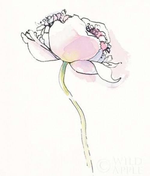 Single Pink Somniferums I on White Poster Print by  Shirley Novak - Item # VARPDX25250