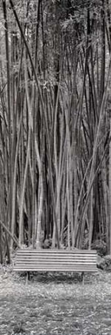Orto Botanico - 1 Poster Print by Alan Blaustein - Item # VARPDXABIT215