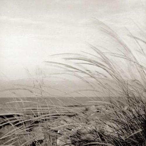 Tuscan Coast Dunes - 1 Poster Print by Alan Blaustein - Item # VARPDXABSH136