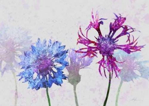 Colorful Cornflowers 2 Poster Print by Ken Roko - Item # VARPDX476ROK1030