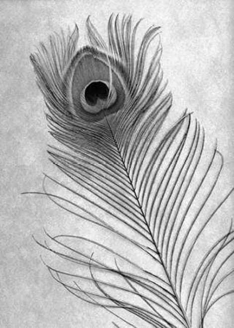 Feathers - 10 Poster Print by Alan Blaustein - Item # VARPDXABSLF117A