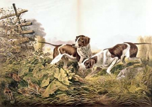 American Field Sports. On a Point. Poster Print by Currier and Ives - Item # VARPDX277161