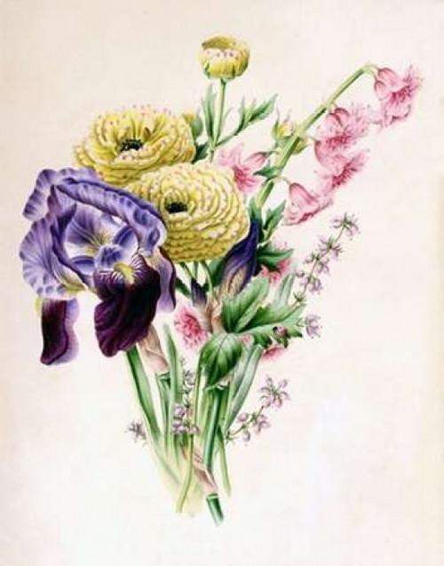 Iris Poster Print by  James Andrews - Item # VARPDXJA12