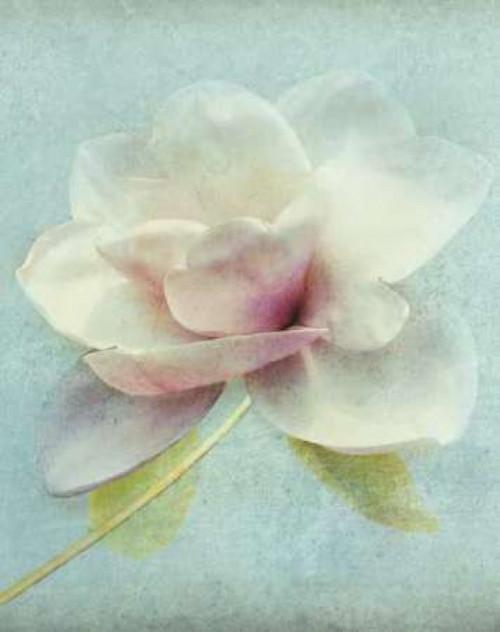 Magnolia Poster Print by Amy Melious - Item # VARPDXMEL403