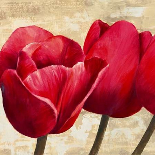Red Tulips Poster Print by Cynthia Ann - Item # VARPDX1AN1219