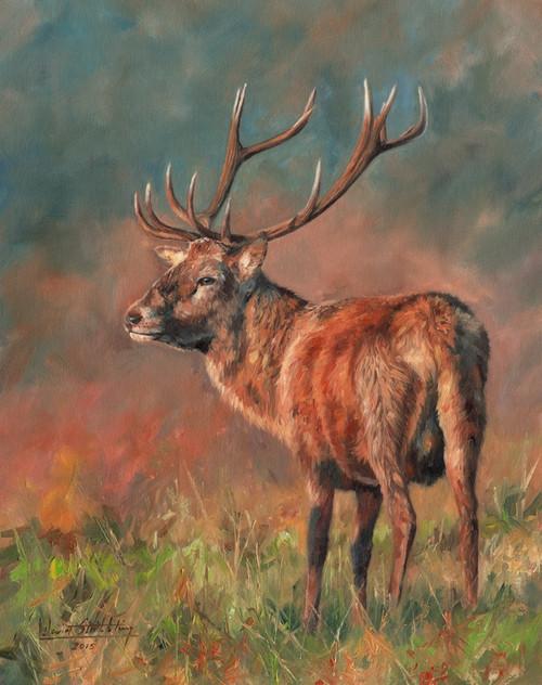 Red Deer Stag  oil on canvas Poster Print by David Stribbling - Item # VARMGL601449