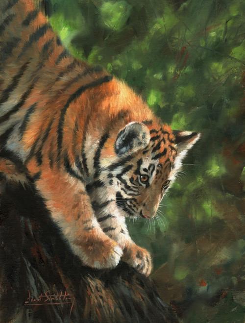 Tiger Cub Climbing Down Tree Poster Print by David Stribbling - Item # VARMGL601052
