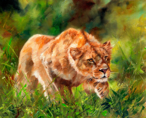 Lioness Shadows Poster Print by David Stribbling - Item # VARMGL601769