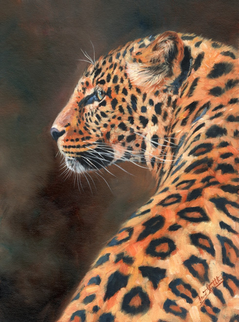 LEOPARD PROFILE Poster Print by David Stribbling - Item # VARMGL601484