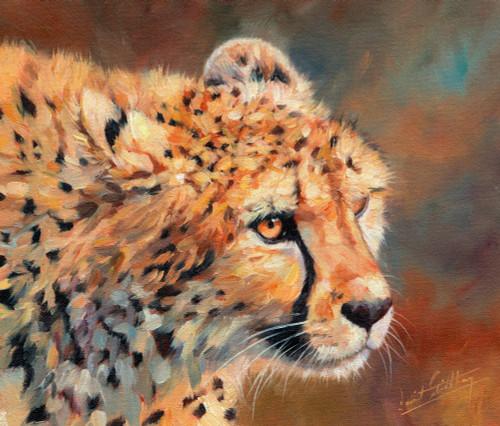 Cheetah Cub Poster Print by David Stribbling - Item # VARMGL601375