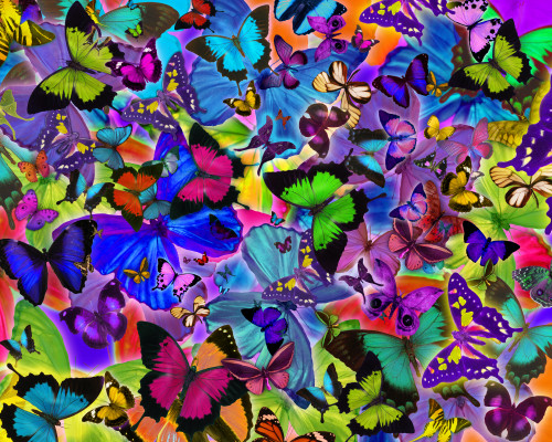 Colours of Butterflies Poster Print by Alixandra Mullins - Item # VARMGL601446