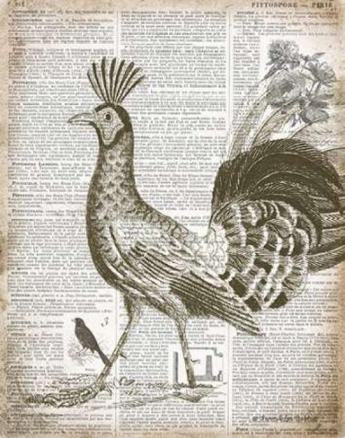 Vintage Bird II Poster Print by Gwendolyn Babbitt - Item # VARPDXBAB090