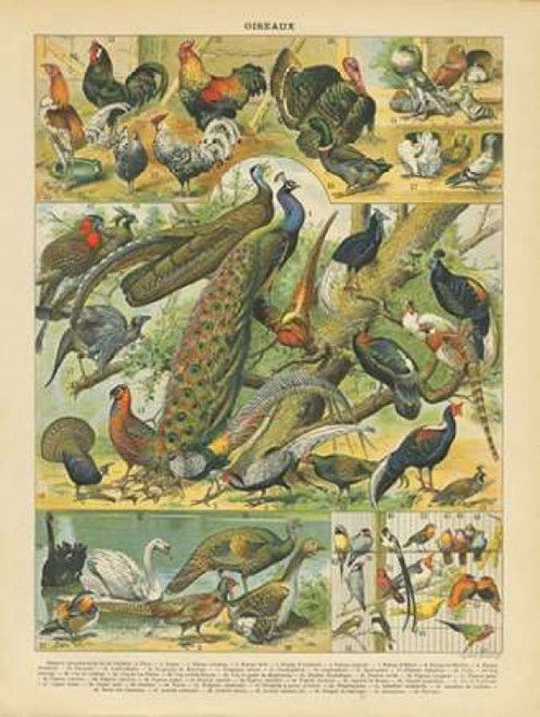 Oiseaux I Poster Print by Gwendolyn Babbitt - Item # VARPDXBAB054