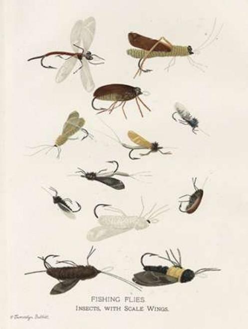 Fishing Flies I Poster Print by Gwendolyn Babbitt - Item # VARPDXBAB389