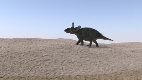 Triceratops walking across a barren landscape Poster Print - Item # VARPSTKVA600496P