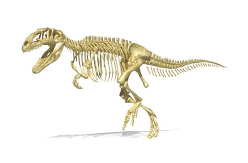 3D rendering of a Giganotosaurus dinosaur skeleton, perspective view Poster Print - Item # VARPSTVET600027P