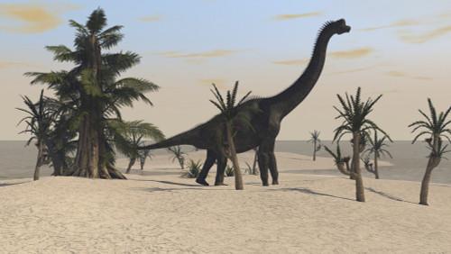 Large Brachiosaurus in a tropical environment Poster Print - Item # VARPSTKVA600313P