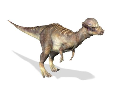 3D rendering of a Pachycephalosaurus dinosaur Poster Print - Item # VARPSTVET600006P