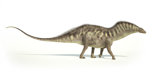 Amargasaurus dinosaur on white background with drop shadow Poster Print - Item # VARPSTVET600058P
