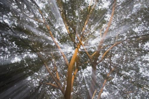 Light Streams Through Tropical Tree, Costa Rica PosterPrint - Item # VARDPI1866137