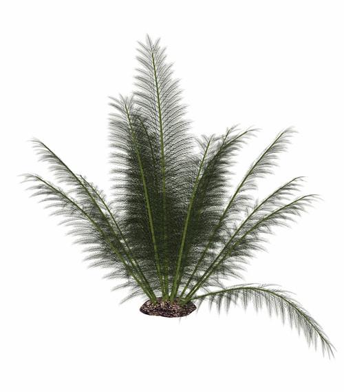 Onychiopsis prehistoric fern, isolated on white background Poster Print - Item # VARPSTEDV600362P